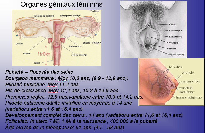 06organegnitauxfminins.jpg